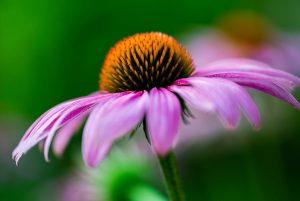 عکاسی از گل ها